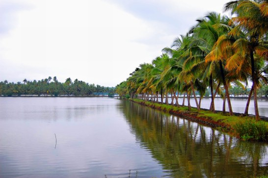 Coconut_trees_along_salty_inland_water